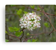 Bloom on the Tree Canvas Print