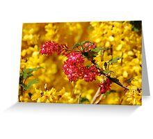 Red flower in flowering forsythia shrub Greeting Card