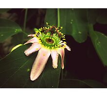 Colourful flower:) Photographic Print