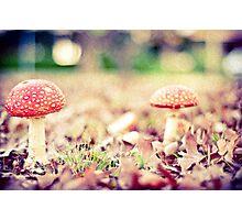 Funky Mushrooms Photographic Print