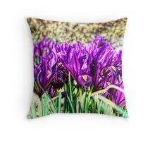 Iris Histrioides Throw Pillow