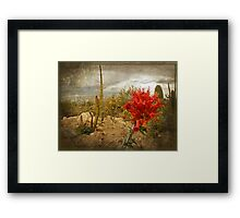 The Bloom of the Octillo Framed Print