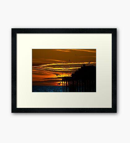 Birds at Sunset Framed Print