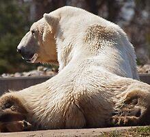 Bear Butt by kelleygirl