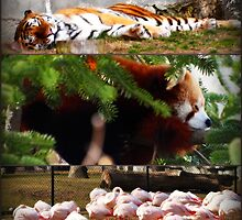 It was a Napping Zoo by kelleygirl