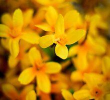 Yellow Flowers by Daniel  Duffy