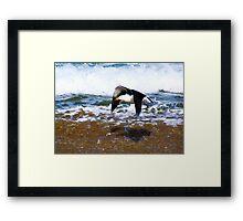 Pacific Gull Framed Print