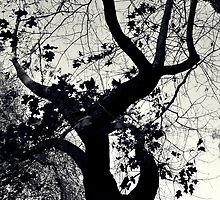 Black Trunk by Karen E Camilleri