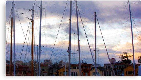 San Francisco Marina by David Denny