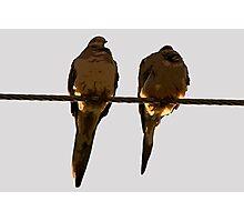 2 Turtle Doves Photographic Print