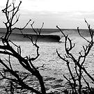Between Trees by Erik Holt