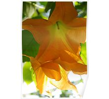 Angels' Trumpets Poster
