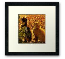 Kittens of gold Framed Print