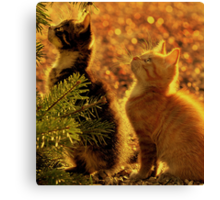 Kittens of gold Canvas Print