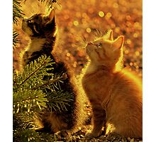 Kittens of gold Photographic Print