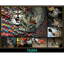 Kitten Crazies!! Photographic Print