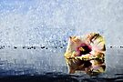 How To Water A Flower by Randy Richards