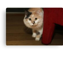 BUFFY THE BEAUTIFUL CAT Canvas Print