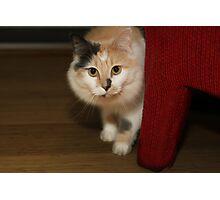 BUFFY THE BEAUTIFUL CAT Photographic Print