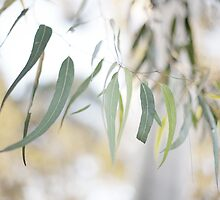 Gum Leaves by Kim Jackman