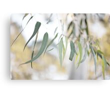 Gum Leaves Canvas Print