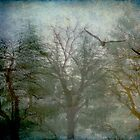 Songs from the Wood by tori yule