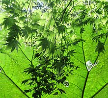 Canopy Of Green - Abbotsbury, Dorset .Uk by lynn carter