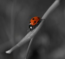 Lady In Red . by relayer51