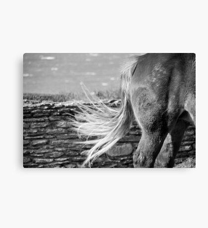 Le Conquet - Blond tail. Canvas Print