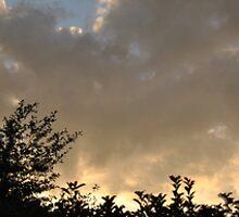 Sunrise over the Hedge by peterhau