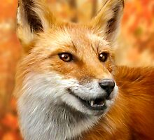 Red Fox Portrait in Autumn by Norman Rawn