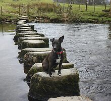 A Walk By Mere,Tarn and Water - The Terrier by Jamie  Green