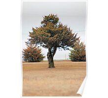 Cedar Trees Poster