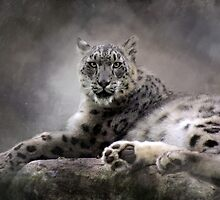 Resting Snow Leopard by Norman Rawn