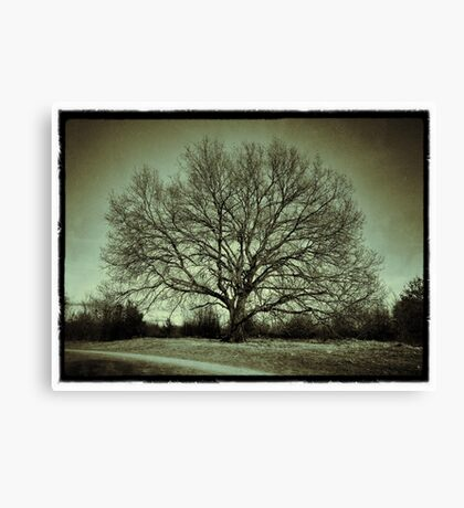 Nostalgic Tree Canvas Print