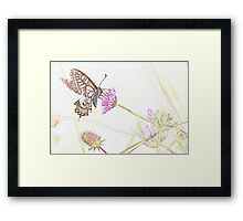 Swallowtail Butterfly in Pastel Framed Print