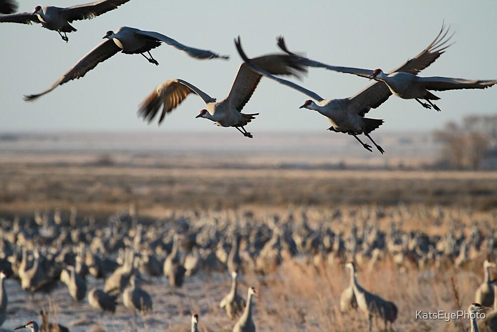 Monte Vista Sandhill Cranes 2 by KatsEyePhoto