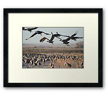 Monte Vista Sandhill Cranes 2 Framed Print