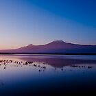 Kilimanjaro from Amboseli at sunrise by sloweater