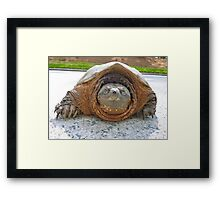 Snappy Turtle by Jonathan Green Framed Print