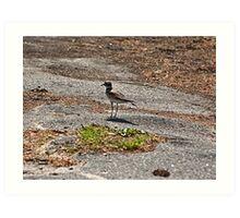 waterbird on the run Art Print