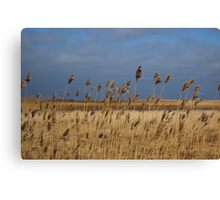 Grass hit by the Wind Canvas Print