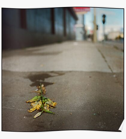 Fleurs fanées Poster