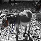 Donkey&#x27;s in BW with a splash of colour   by LorrieBee