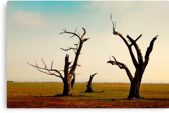Bellbrae Trees by Erik Holt