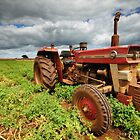 "New Group in Town ""Massey Ferguson & the Potatoes"" by Stephen Gregory"