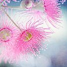 Pink Beauty by Margi