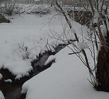 Winter Wonderland at Big Lake Park by Rachel Figueroa
