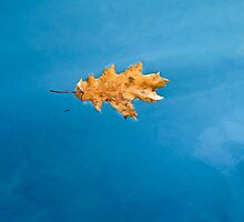 leaf on the water 2 by Anne Scantlebury