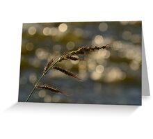 Sunset Grass Greeting Card